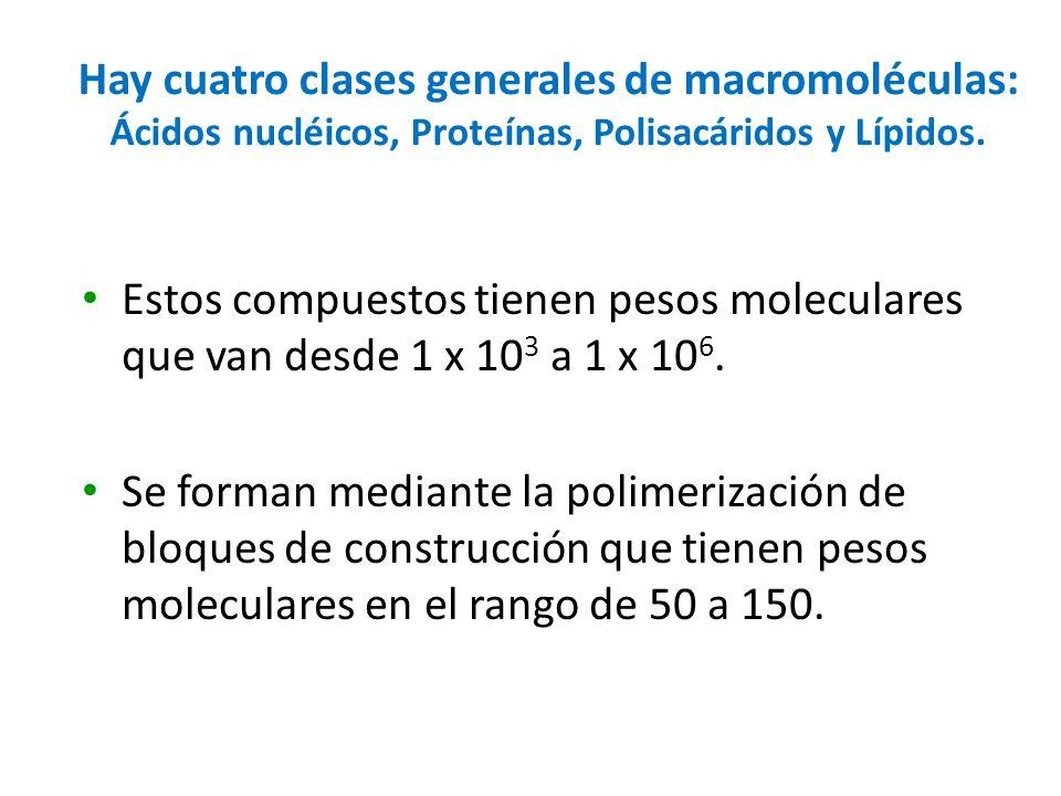 Hay cuatro clases generales de macromoléculas: Ácidos nucléicos, Proteínas, Polisacáridos y Lípidos. Estos compuestos tienen pesos moleculares que van