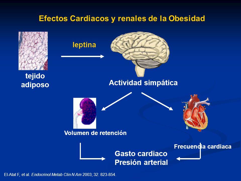 Efectos Cardiacos y renales de la Obesidad leptina tejido adiposo Actividad simpática Frecuencia cardiaca Gasto cardiaco Presión arterial Volumen de r