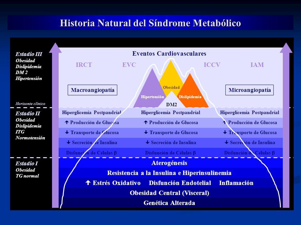 Historia Natural del Síndrome Metabólico Genética Alterada Obesidad Central (Visceral) Estrés Oxidativo Disfunción Endotelial Inflamación Resistencia