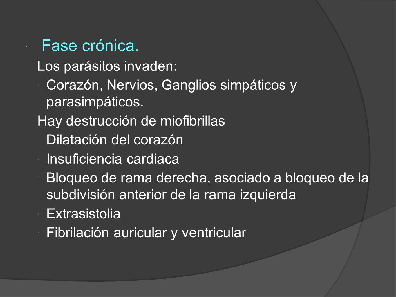 Fase crónica.Los parásitos invaden: Corazón, Nervios, Ganglios simpáticos y parasimpáticos.