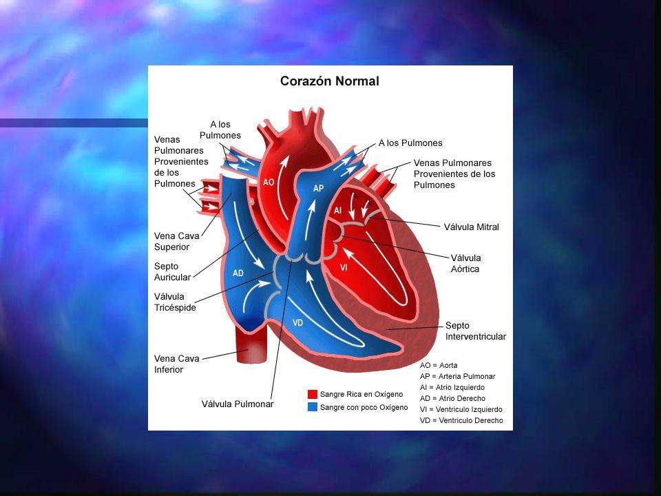 PERSISTENCIA DEL PATRON FETAL n GENERALIDADES: –La placenta es el organo encargado del intercambio gaseoso.
