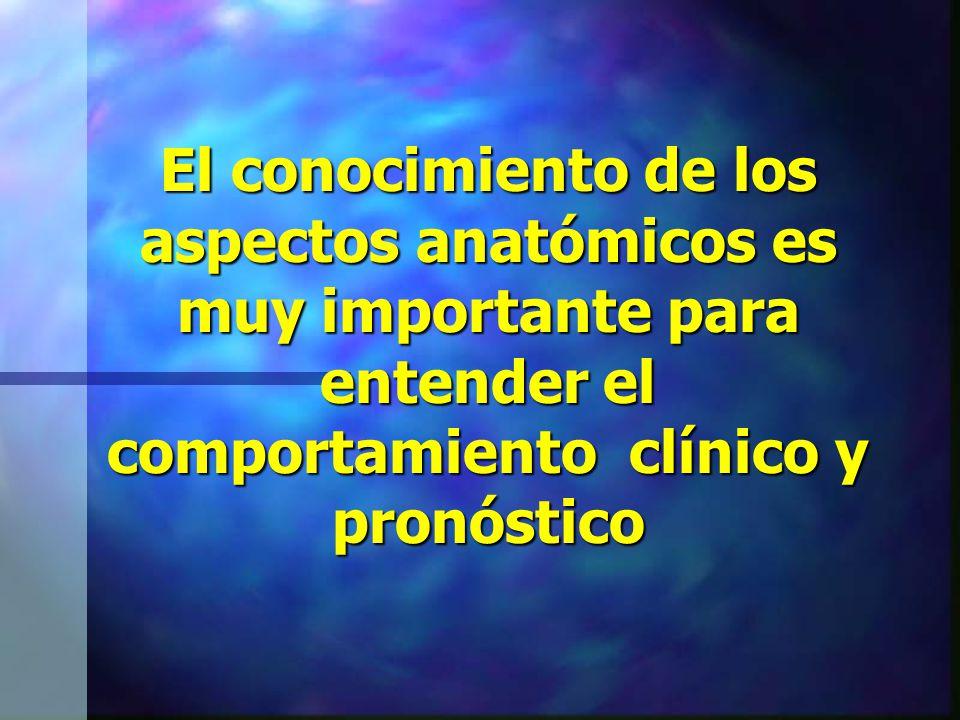 El conocimiento de los aspectos anatómicos es muy importante para entender el comportamiento clínico y pronóstico
