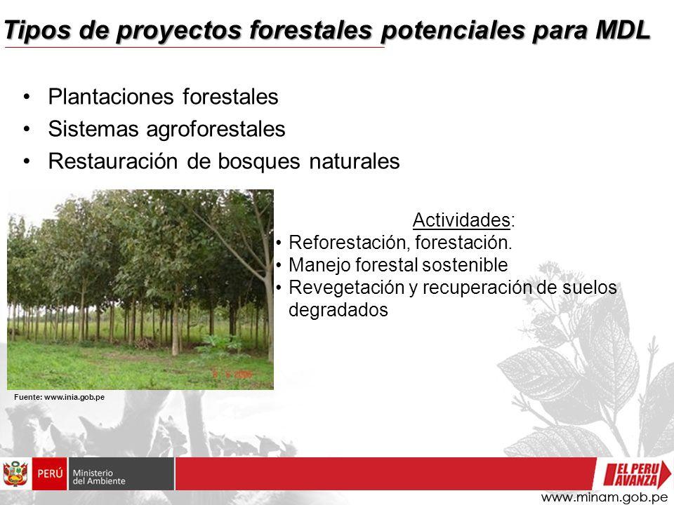 Tipos de proyectos forestales potenciales para MDL Plantaciones forestales Sistemas agroforestales Restauración de bosques naturales Actividades: Reforestación, forestación.