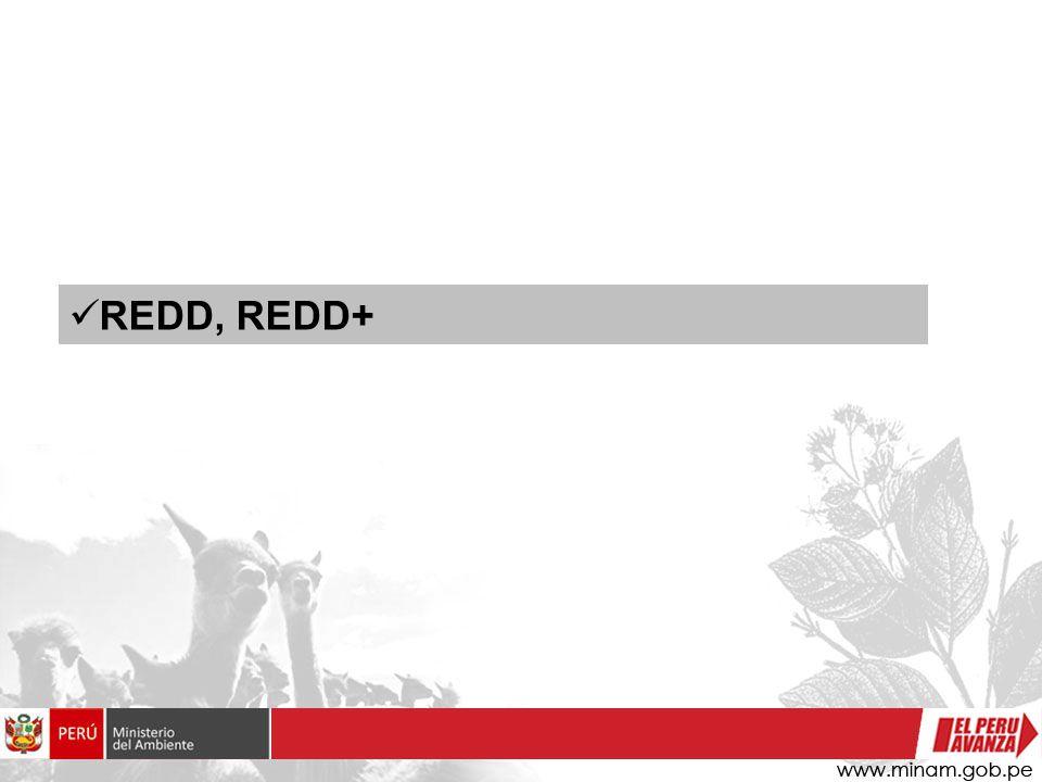 REDD, REDD+