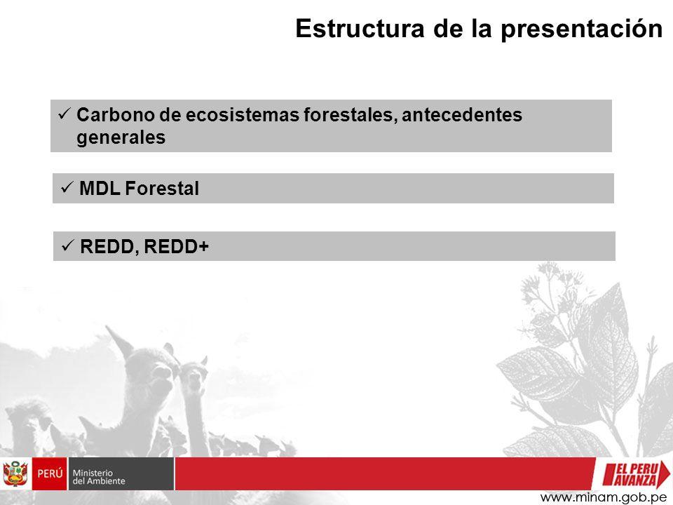 Estructura de la presentación Carbono de ecosistemas forestales, antecedentes generales MDL Forestal REDD, REDD+