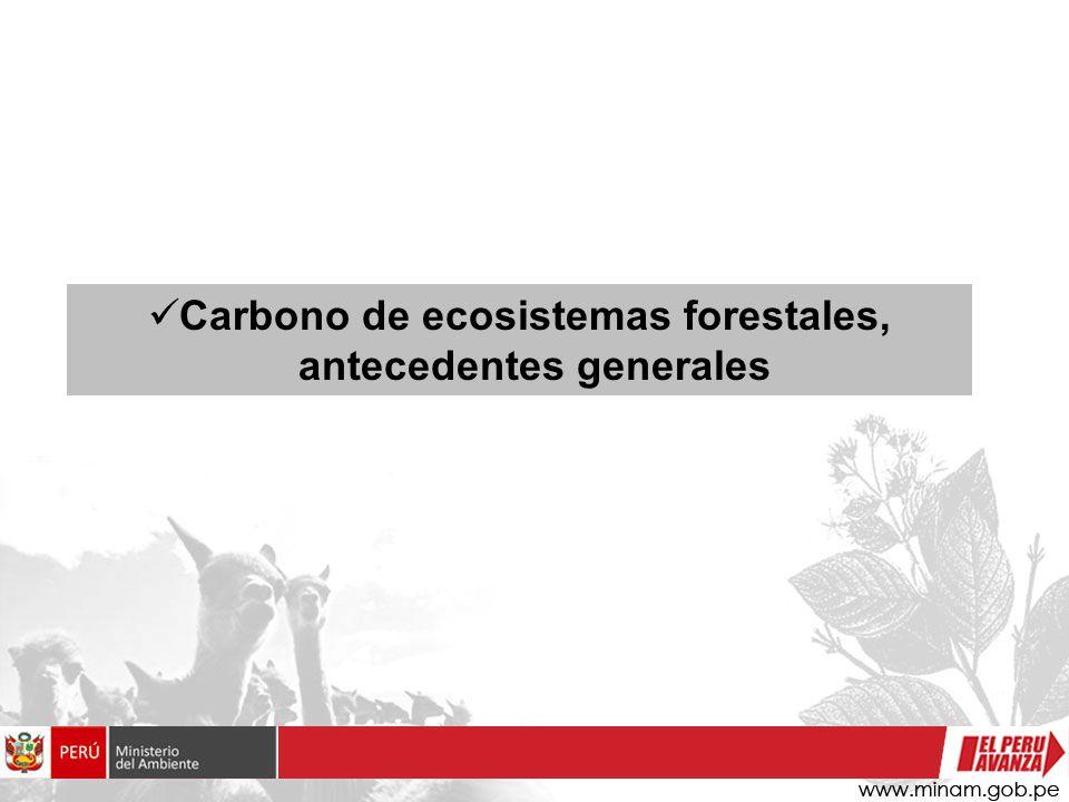 Oportunidades Fortalecimiento de la gobernanza forestal.