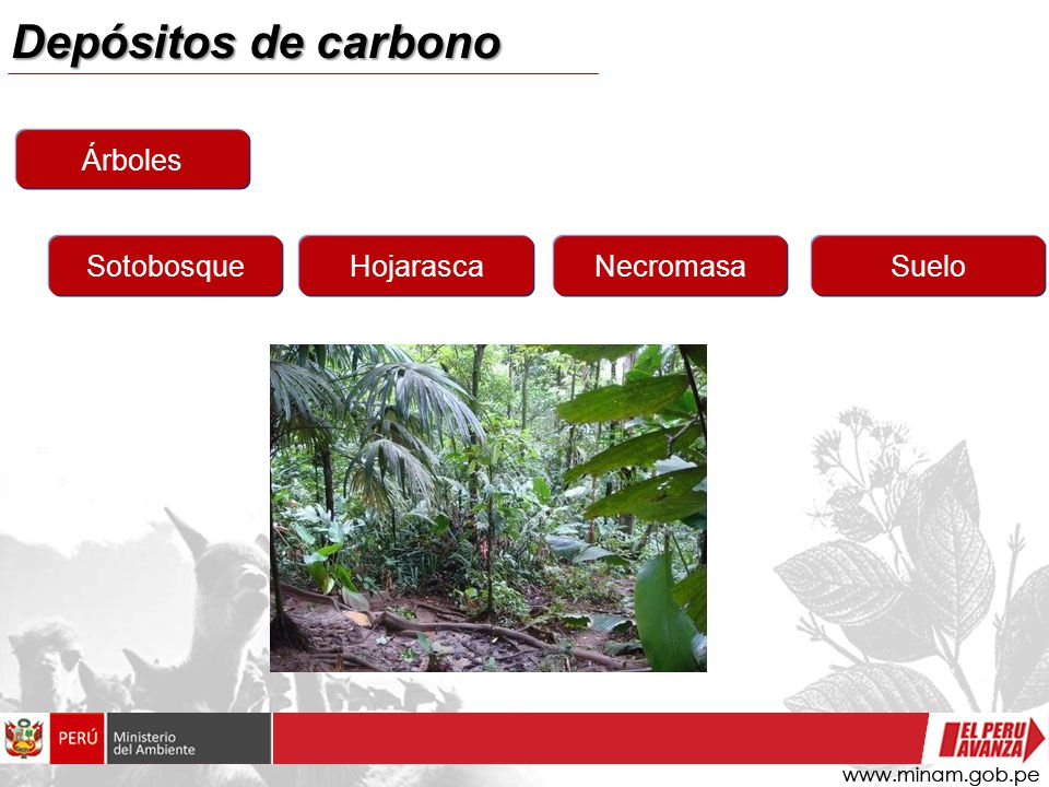 Depósitos de carbono Árboles SotobosqueHojarascaNecromasaSuelo
