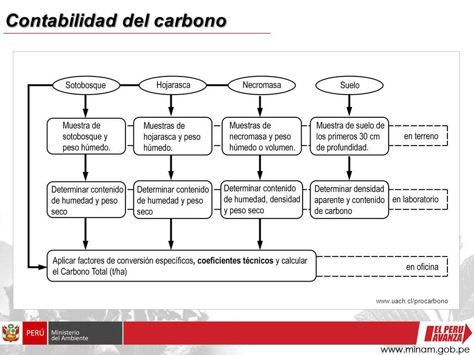 Contabilidad de carbono Árboles Estimación de BIOMASA FUSTE COMERCIAL ARBOL COMPLETO CO 2 Funciones de volumen Densidad de la madera Crecimientos Factores de expansión Funciones de biomasa Crecimientos Factores de expansión Decisiones Estimación de VOLUMEN