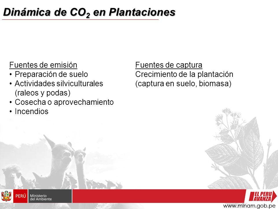 Dinámica de CO 2 en Plantaciones Fuentes de emisión Preparación de suelo Actividades silviculturales (raleos y podas) Cosecha o aprovechamiento Incendios Fuentes de captura Crecimiento de la plantación (captura en suelo, biomasa)