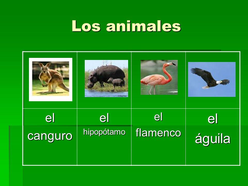 elcanguroelhipopótamoelflamencoeláguila