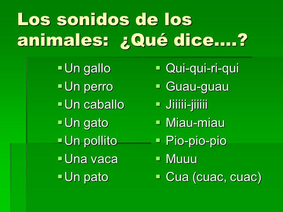 Los sonidos de los animales: ¿Qué dice….? Un gallo Un gallo Un perro Un perro Un caballo Un caballo Un gato Un gato Un pollito Un pollito Una vaca Una