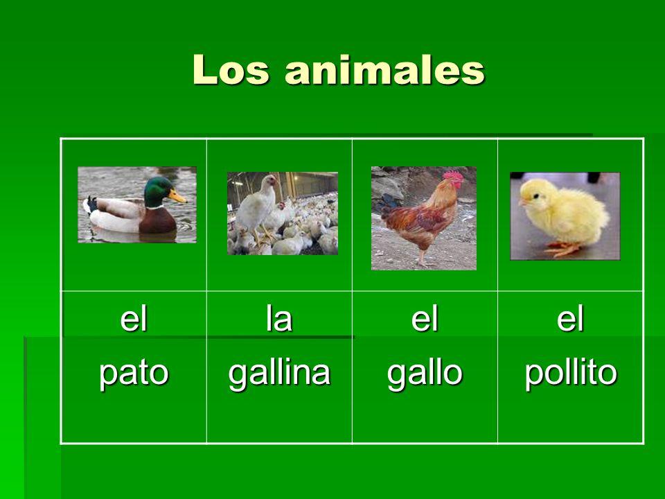 Los animales elpatolagallinaelgalloelpollito