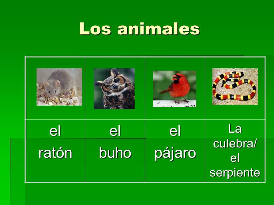 Los animales elloboelzorroelzorillolaardilla