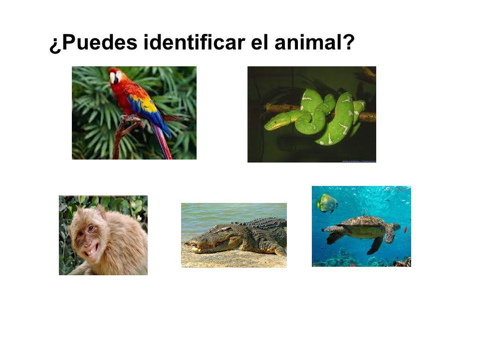 ¿Puedes identificar el animal?