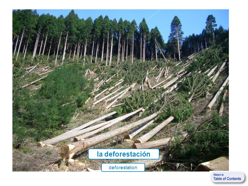 la deforestación deforestation