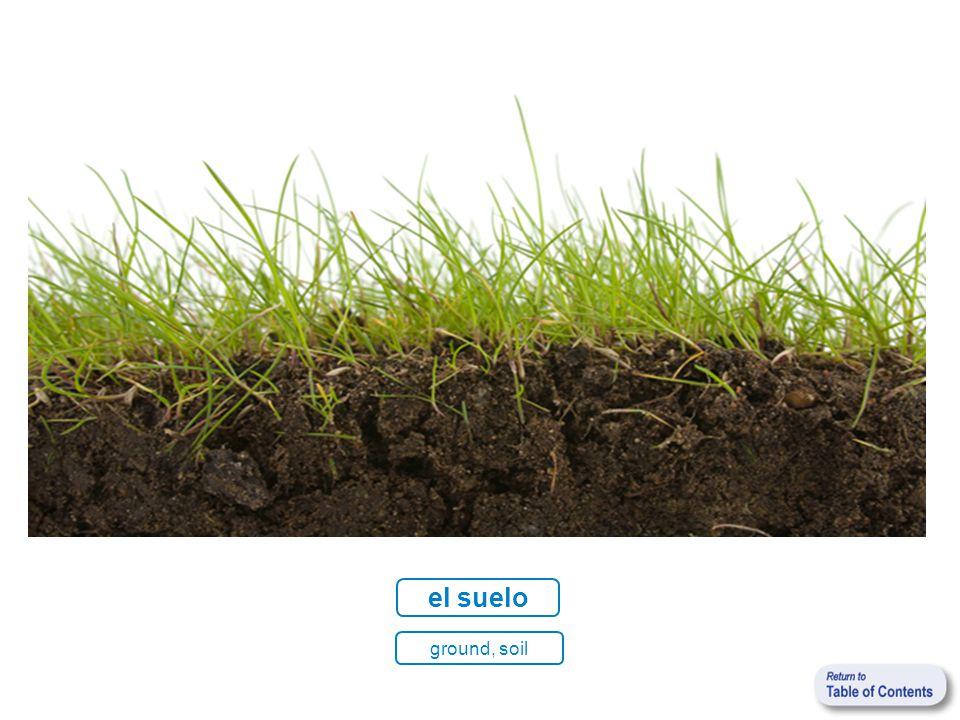 el suelo ground, soil