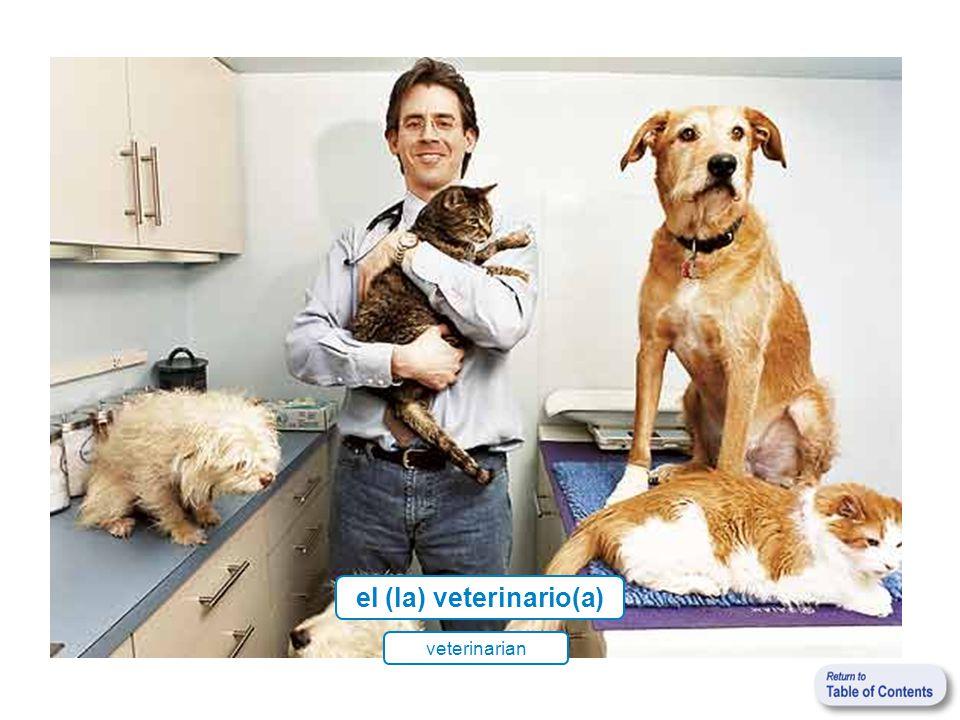 el (la) veterinario(a) veterinarian