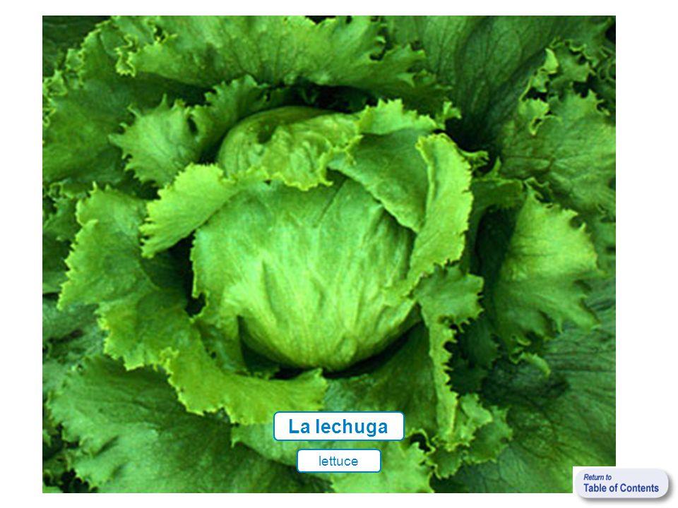 lettuce La lechuga