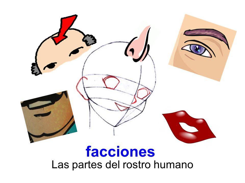 facciones Las partes del rostro humano