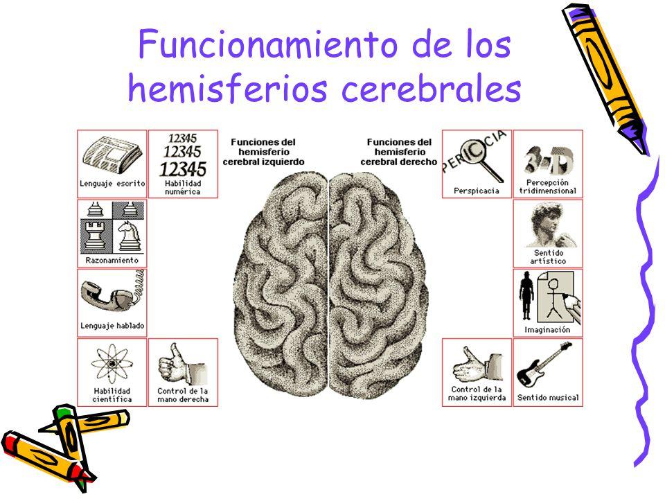 Funcionamiento de los hemisferios cerebrales