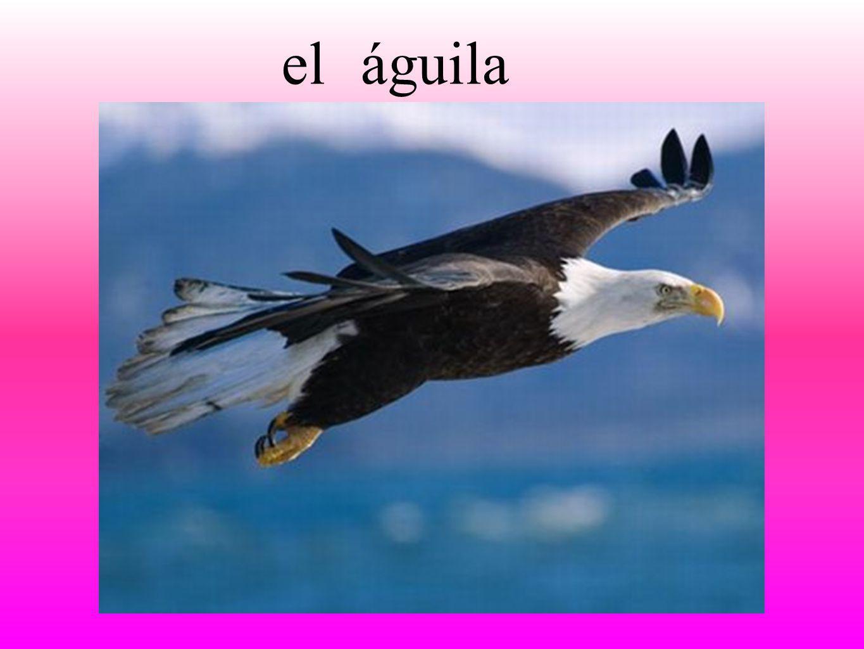 águilael