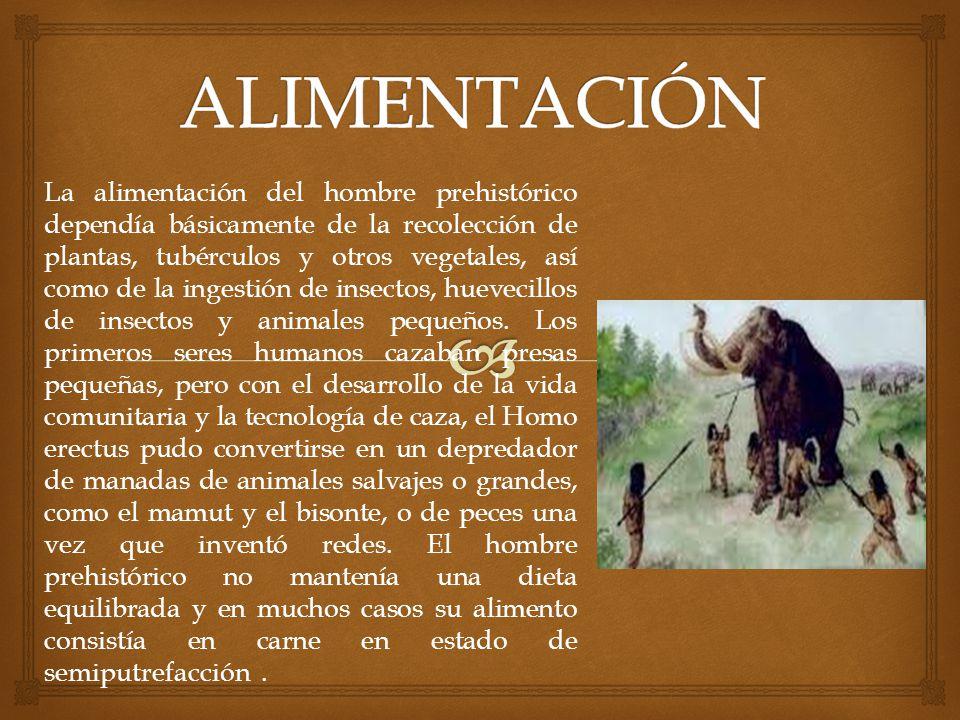 La alimentación del hombre prehistórico dependía básicamente de la recolección de plantas, tubérculos y otros vegetales, así como de la ingestión de i