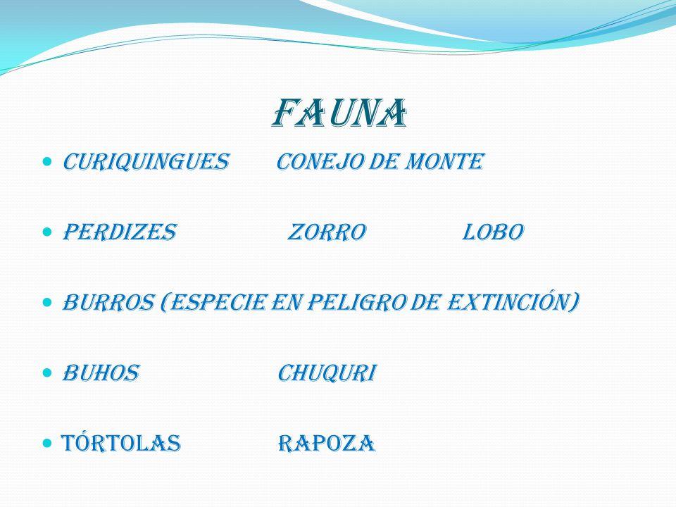 FAUNA CURIQUINGUES CONEJO DE MONTE PERDIZES ZORRO LOBO BURROS (Especie en peligro de extinción) BUHOS CHUQURI TÓRTOLAS RAPOZA