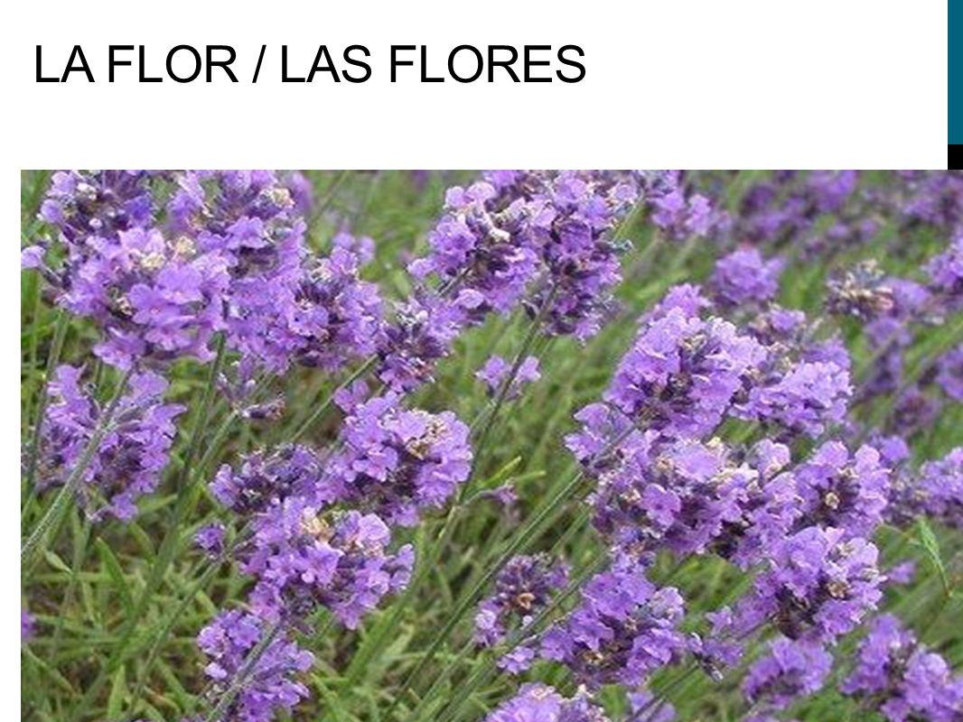 LA FLOR / LAS FLORES