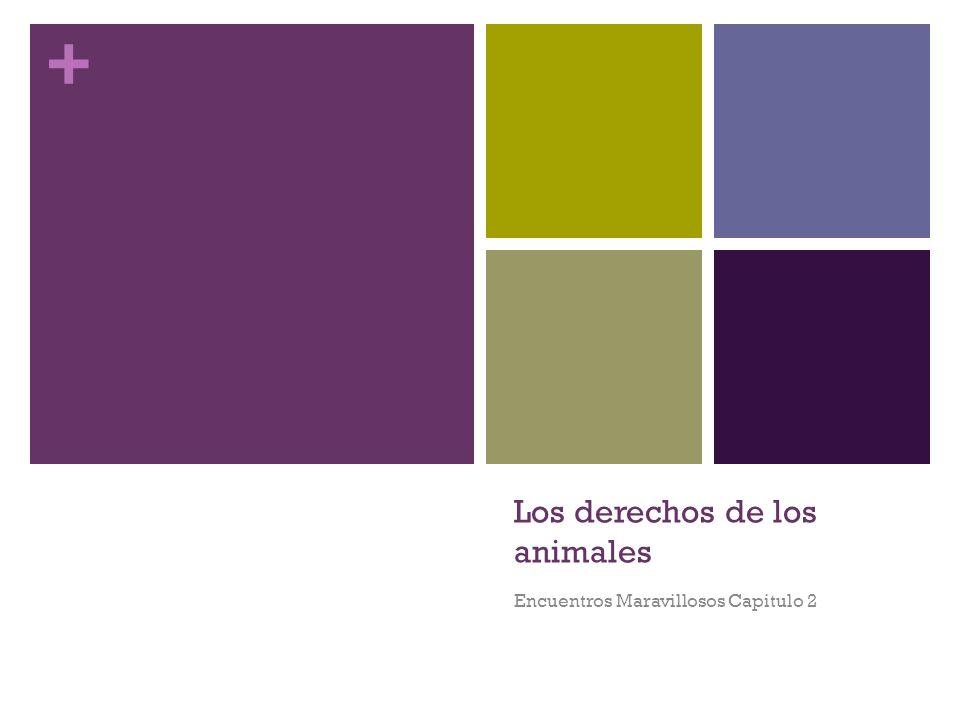 + Los derechos de los animales Encuentros Maravillosos Capitulo 2