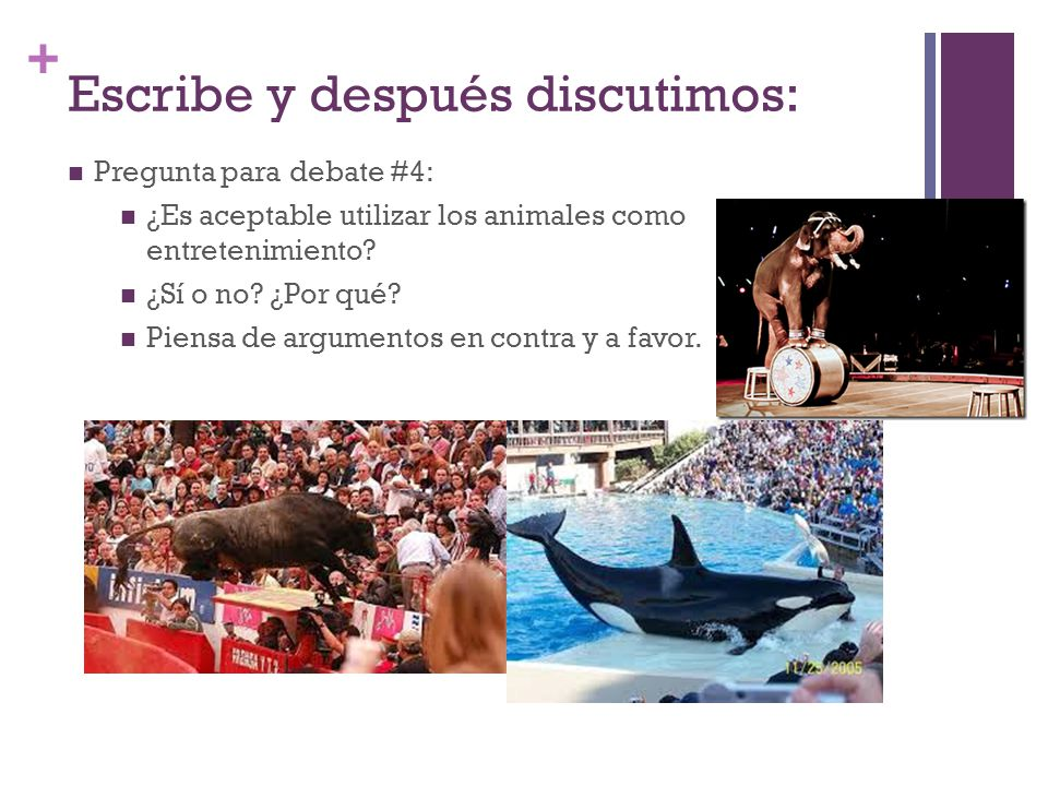 + Escribe y después discutimos: Pregunta para debate #4: ¿Es aceptable utilizar los animales como entretenimiento.