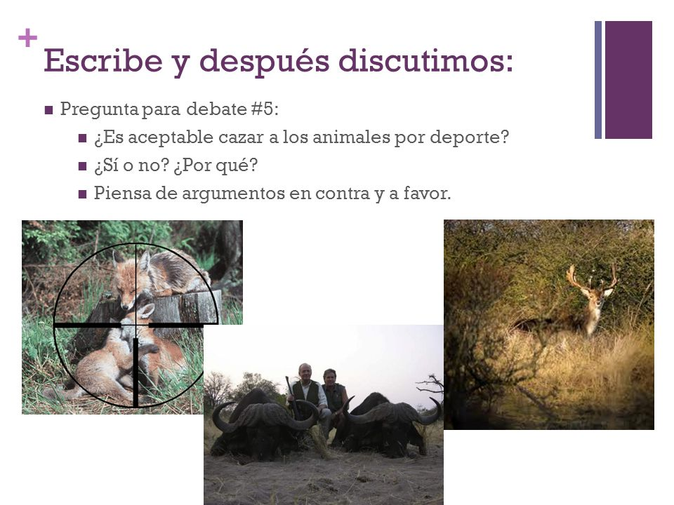 + Escribe y después discutimos: Pregunta para debate #5: ¿Es aceptable cazar a los animales por deporte.
