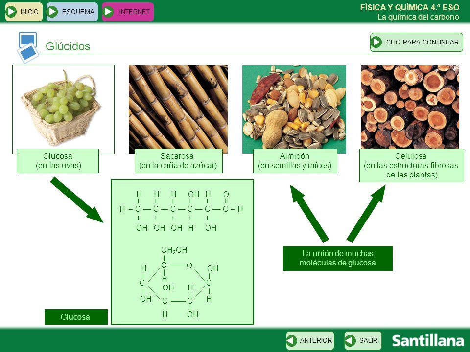 FÍSICA Y QUÍMICA 4.º ESO La química del carbono Glúcidos ESQUEMA INTERNET SALIRANTERIORCLIC PARA CONTINUAR INICIO Glucosa (en las uvas) Almidón (en se