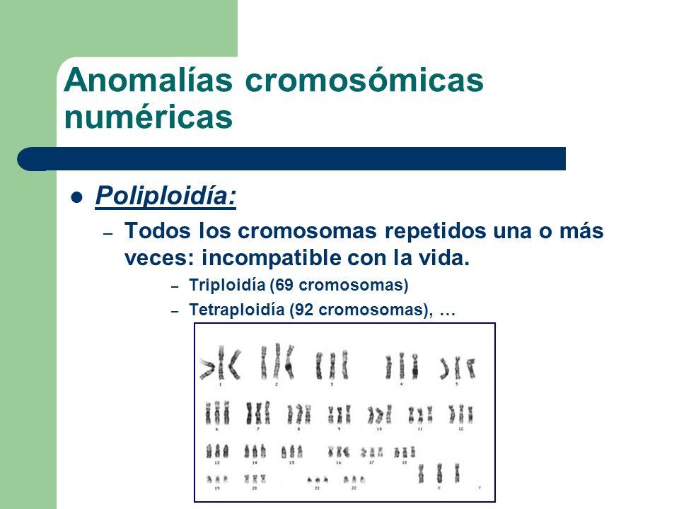 Poliploidía: – Todos los cromosomas repetidos una o más veces: incompatible con la vida. – Triploidía (69 cromosomas) – Tetraploidía (92 cromosomas),