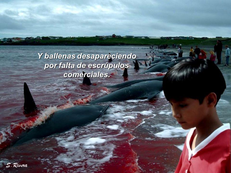 Y ballenas desapareciendo por falta de escrúpulos comerciales.