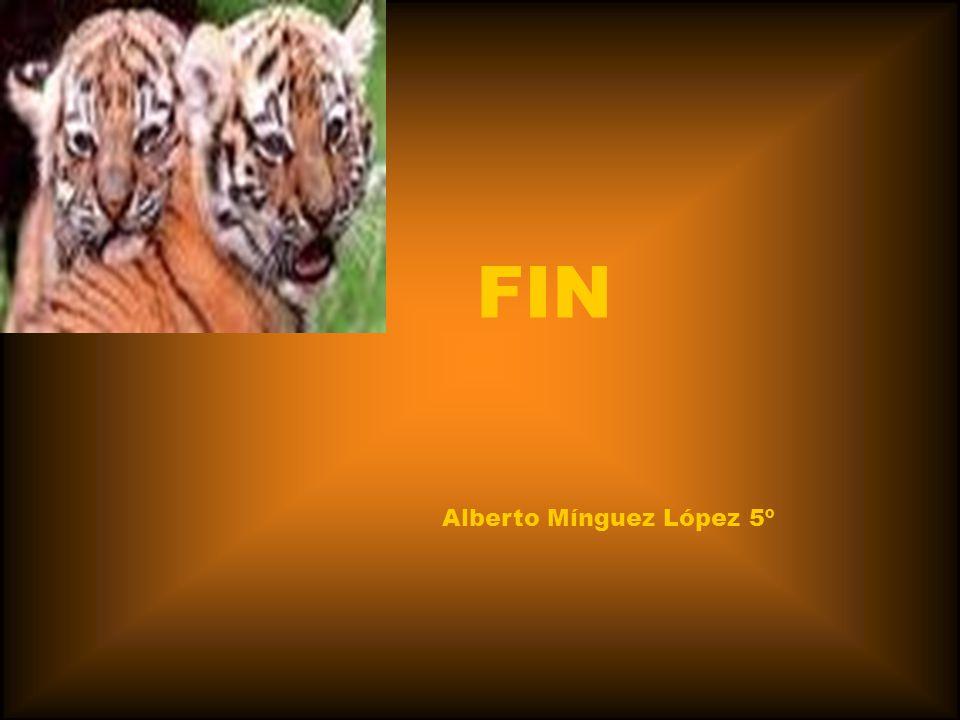 Alberto Mínguez López 5º FIN
