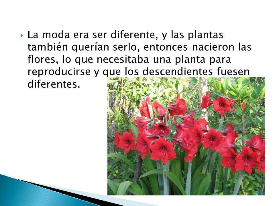 La moda era ser diferente, y las plantas también querían serlo, entonces nacieron las flores, lo que necesitaba una planta para reproducirse y que los