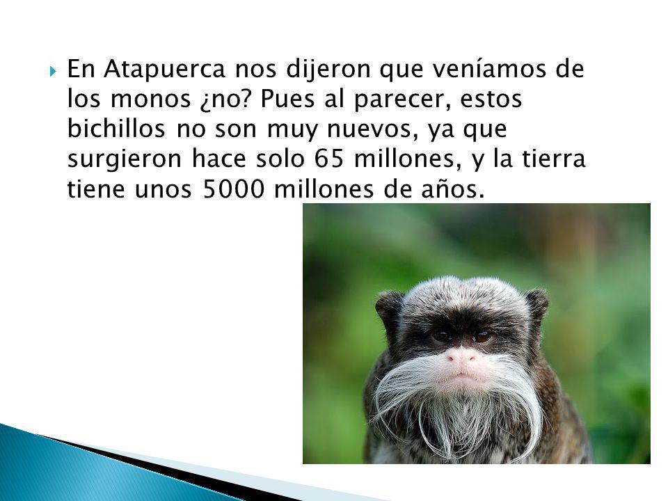 En Atapuerca nos dijeron que veníamos de los monos ¿no? Pues al parecer, estos bichillos no son muy nuevos, ya que surgieron hace solo 65 millones, y