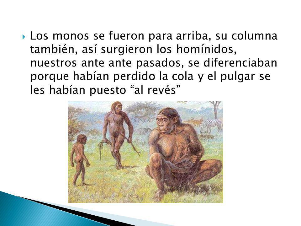 Los monos se fueron para arriba, su columna también, así surgieron los homínidos, nuestros ante ante pasados, se diferenciaban porque habían perdido l