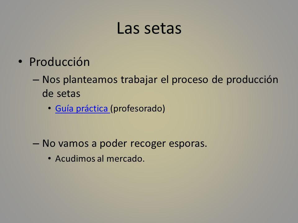 Las setas Producción – Nos planteamos trabajar el proceso de producción de setas Guía práctica (profesorado) Guía práctica – No vamos a poder recoger