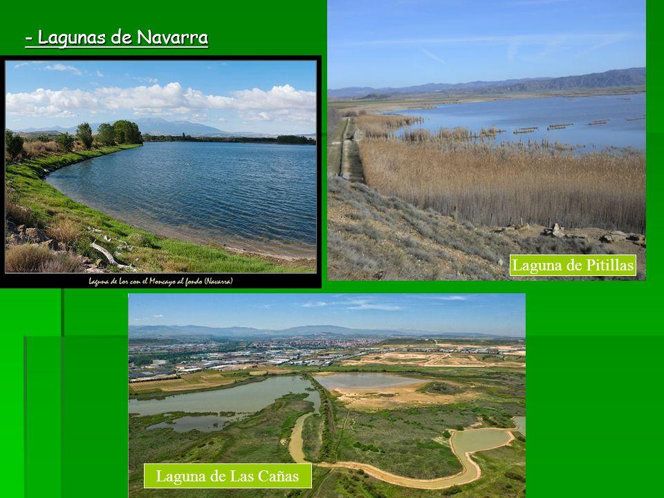 - Lagunas de Navarra Laguna de Pitillas Laguna de Las Cañas