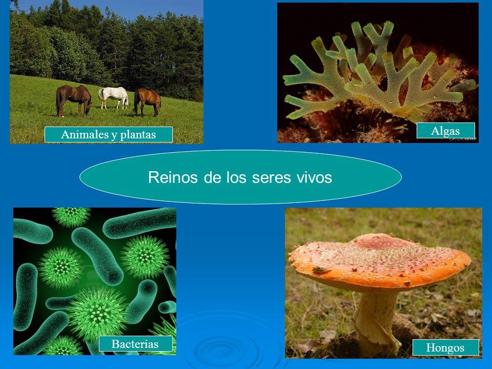 Reinos de los seres vivos Animales y plantas Hongos Bacterias Algas