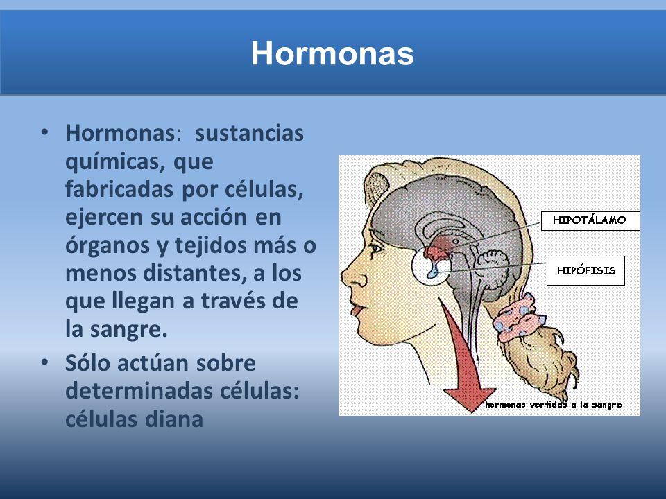 Hormonas: sustancias químicas, que fabricadas por células, ejercen su acción en órganos y tejidos más o menos distantes, a los que llegan a través de la sangre.