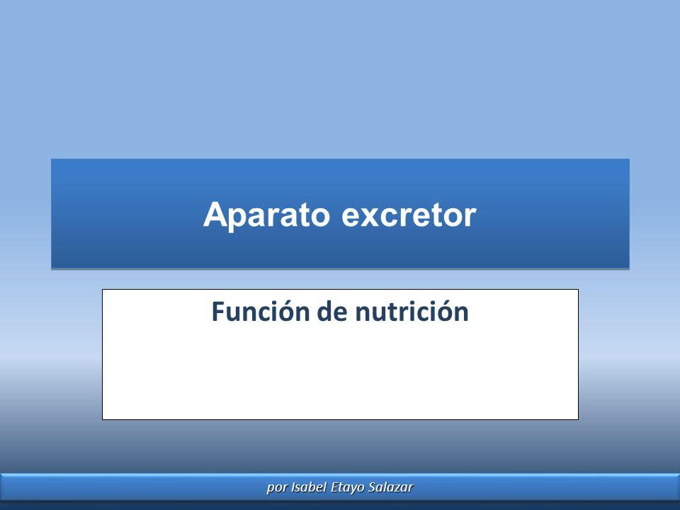 por Isabel Etayo Salazar Aparato excretor Función de nutrición