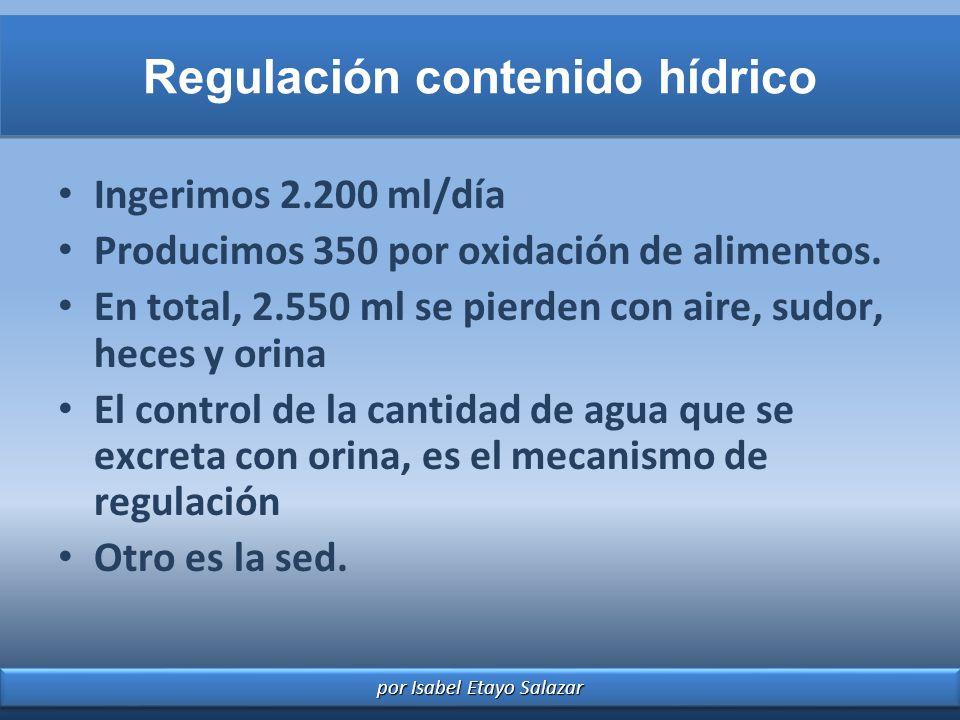 por Isabel Etayo Salazar Regulación contenido hídrico Ingerimos 2.200 ml/día Producimos 350 por oxidación de alimentos. En total, 2.550 ml se pierden