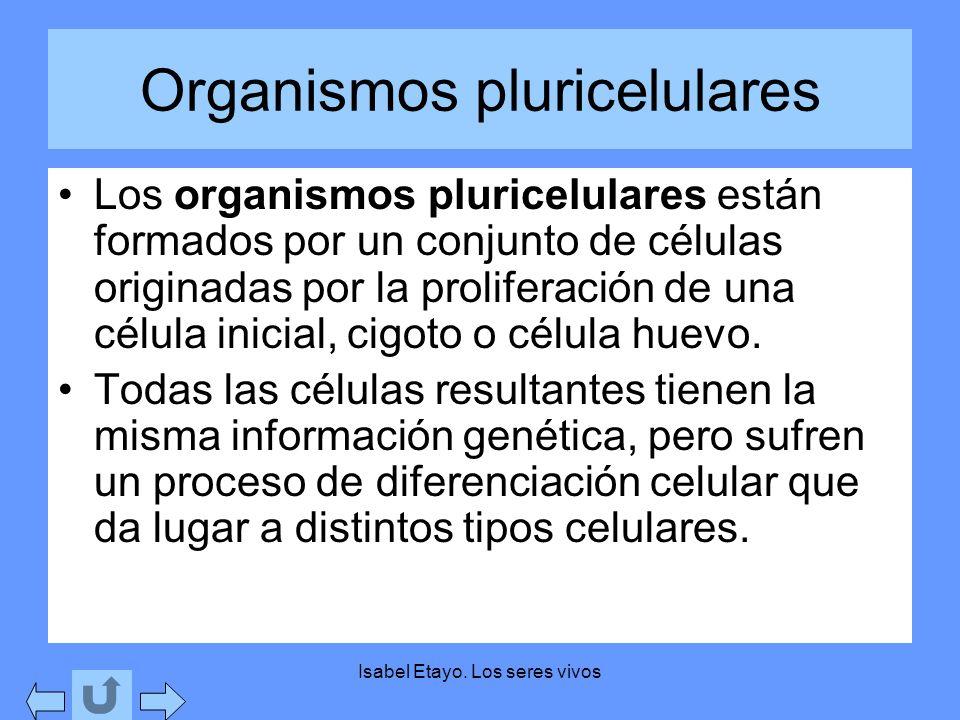 Organismos pluricelulares Los organismos pluricelulares están formados por un conjunto de células originadas por la proliferación de una célula inicia