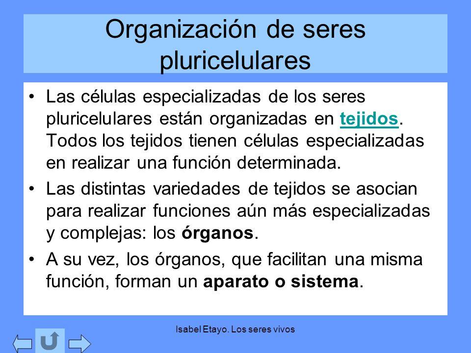 Isabel Etayo. Los seres vivos Organización de seres pluricelulares Las células especializadas de los seres pluricelulares están organizadas en tejidos