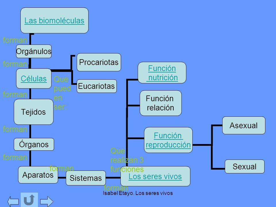 Isabel Etayo. Los seres vivos Sistemas forman Que realizan 3 funciones Que pued en ser: forman