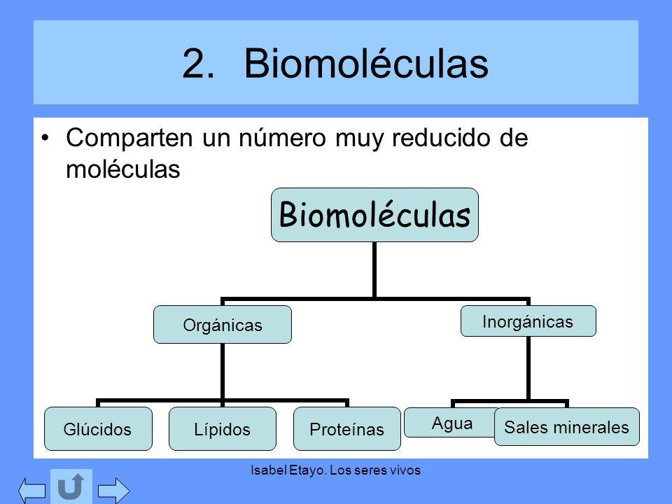 Isabel Etayo. Los seres vivos 2.Biomoléculas Comparten un número muy reducido de moléculas Biomoléculas Orgánicas GlúcidosLípidosProteínas Inorgánicas
