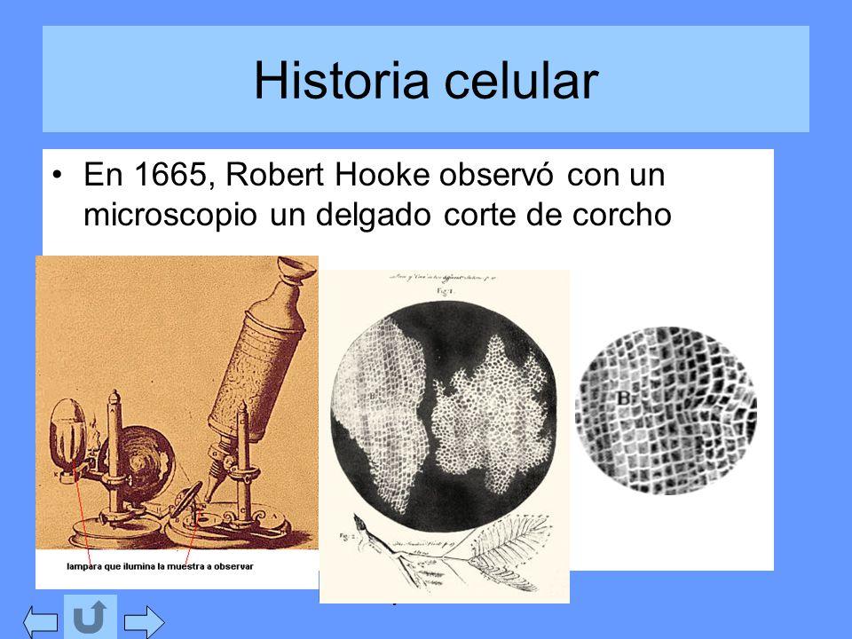 Isabel Etayo. Los seres vivos Historia celular En 1665, Robert Hooke observó con un microscopio un delgado corte de corcho