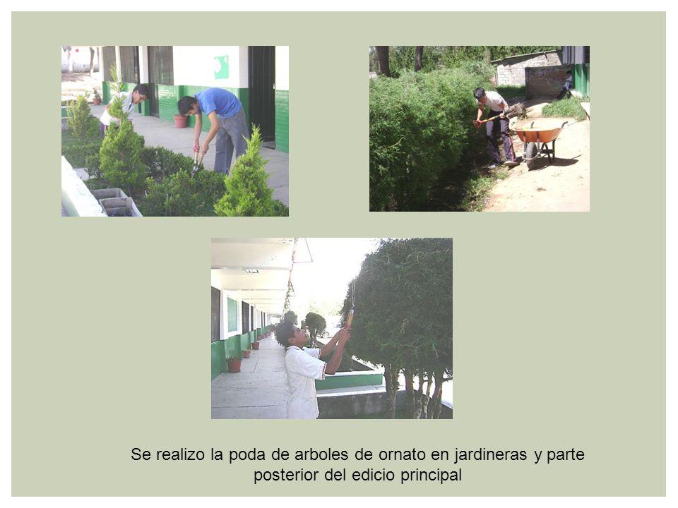 Se realizo la poda de arboles de ornato en jardineras y parte posterior del edicio principal